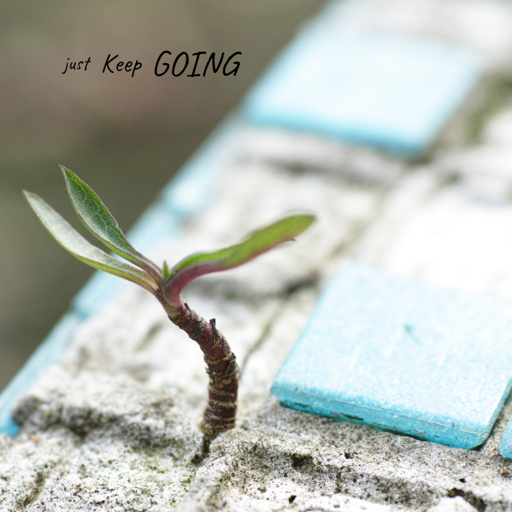 Perseverance. Always keep trying. Move forward. It's never impossible. Be the little spout that grows up in the middle of the pavement.